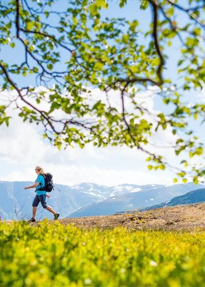 Vandring i Myrkdalen Sverre F Hjornevik